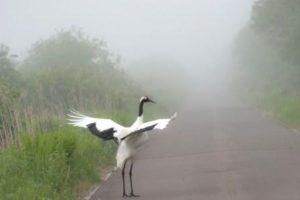 朝靄の丹頂S