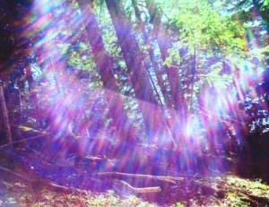 妖精の森S